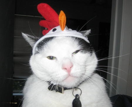 Bruschi loves his chicken hat...