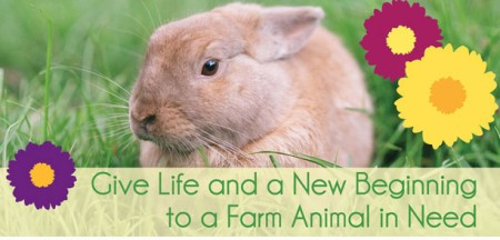 Easter Farm Animal Adoption