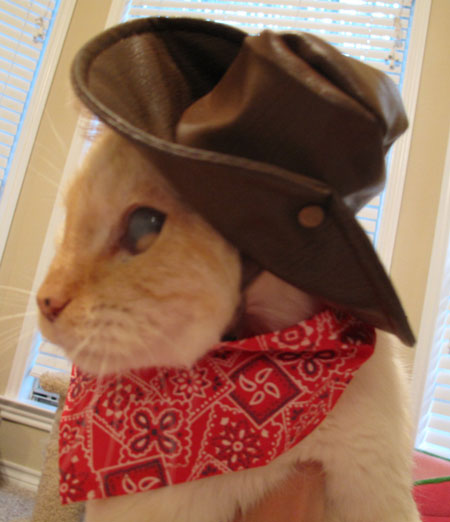 Ashy Halloween Cowboy Costume Cats in Hats
