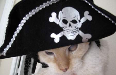 Ashy Halloween Pirate Cats in Hats