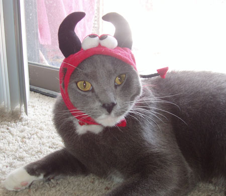 Brady Halloween Devil Cats in Hats Costumes
