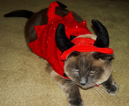 Cats in Hats: Devil TomTom