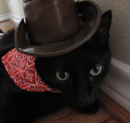 Gaby Halloween Cowboy Costume Cats in Hats
