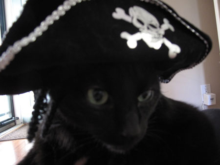 Gaby Halloween Pirate Costume Cats in Hats