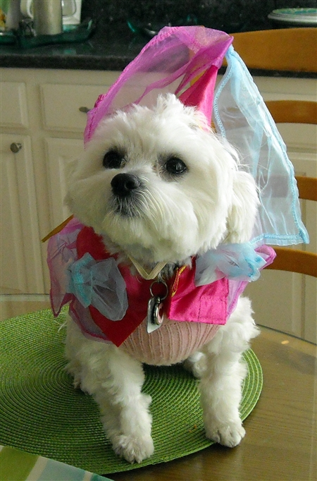 Katie in Halloween Princess Dog Costume