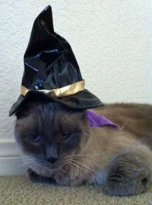 A calmer TomTom looking quite handsome in his witch hat.